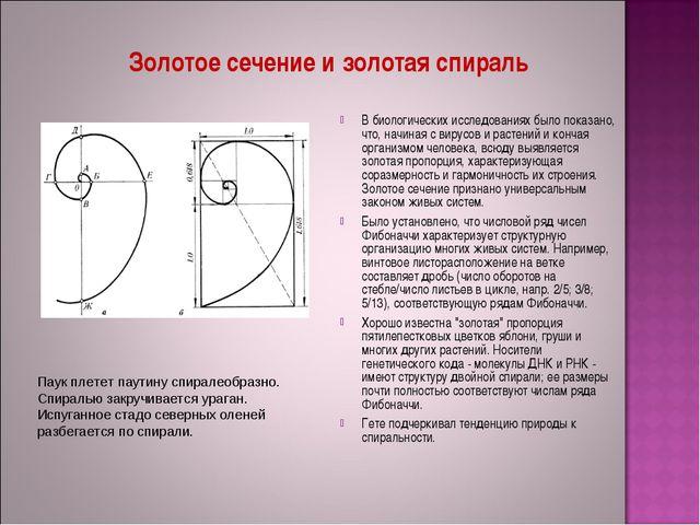 Золотое сечение и золотая спираль В биологических исследованиях было показано...