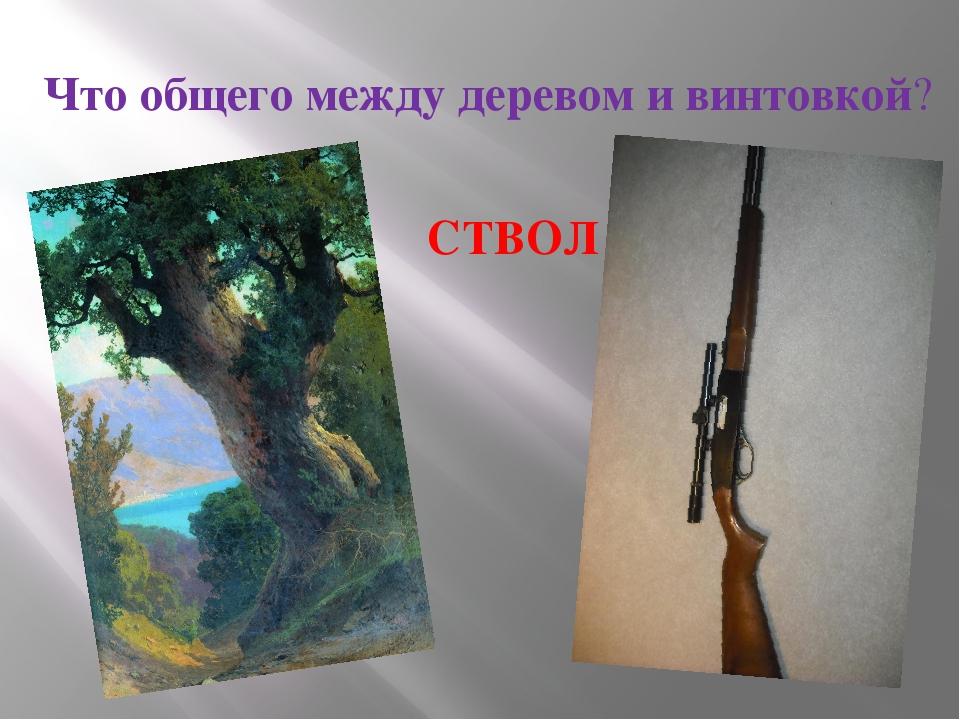 Что общего между деревом и винтовкой? СТВОЛ