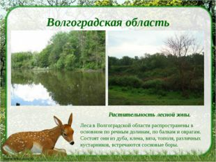 Волгоградская область Растительность лесной зоны. Леса в Волгоградской област