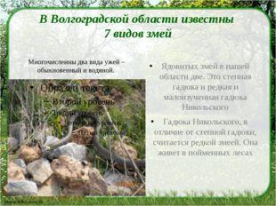 В Волгоградской области известны 7 видов змей Ядовитых змей в нашей области д