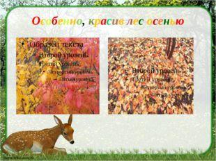 Особенно, красив лес осенью