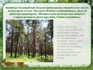 Животные Волгоградской области представлены обитателями степей, полупустынь