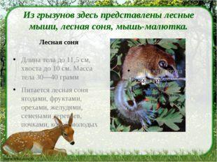 Из грызунов здесь представлены лесные мыши, лесная соня, мышь-малютка. Лесна