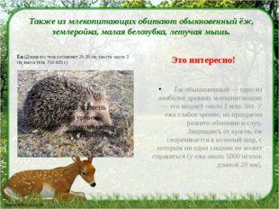 Также из млекопитающих обитают обыкновенный ёж, землеройка, малая белозубка,