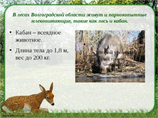 В лесах Волгоградской области живут ипарнокопытные млекопитающие, такие как