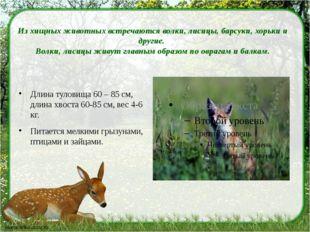 Из хищных животных встречаются волки, лисицы, барсуки, хорьки и другие. Волк