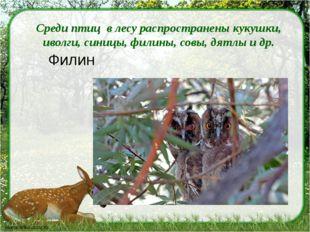 Среди птиц в лесу распространены кукушки, иволги, синицы, филины, совы, дятл