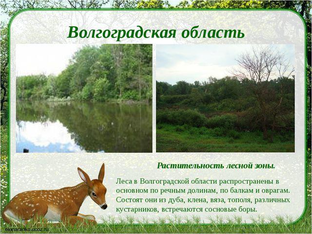 Волгоградская область Растительность лесной зоны. Леса в Волгоградской област...