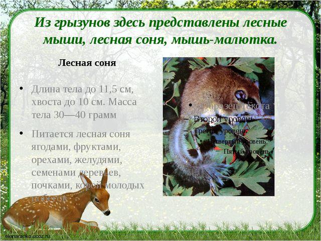 Из грызунов здесь представлены лесные мыши, лесная соня, мышь-малютка. Лесна...