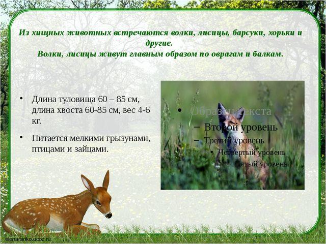 Из хищных животных встречаются волки, лисицы, барсуки, хорьки и другие. Волк...