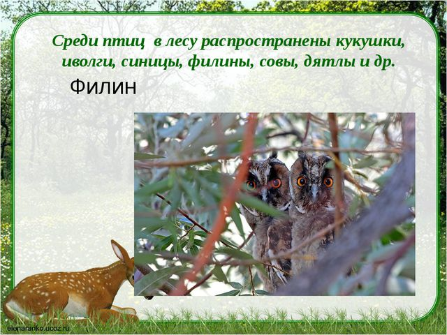 Среди птиц в лесу распространены кукушки, иволги, синицы, филины, совы, дятл...
