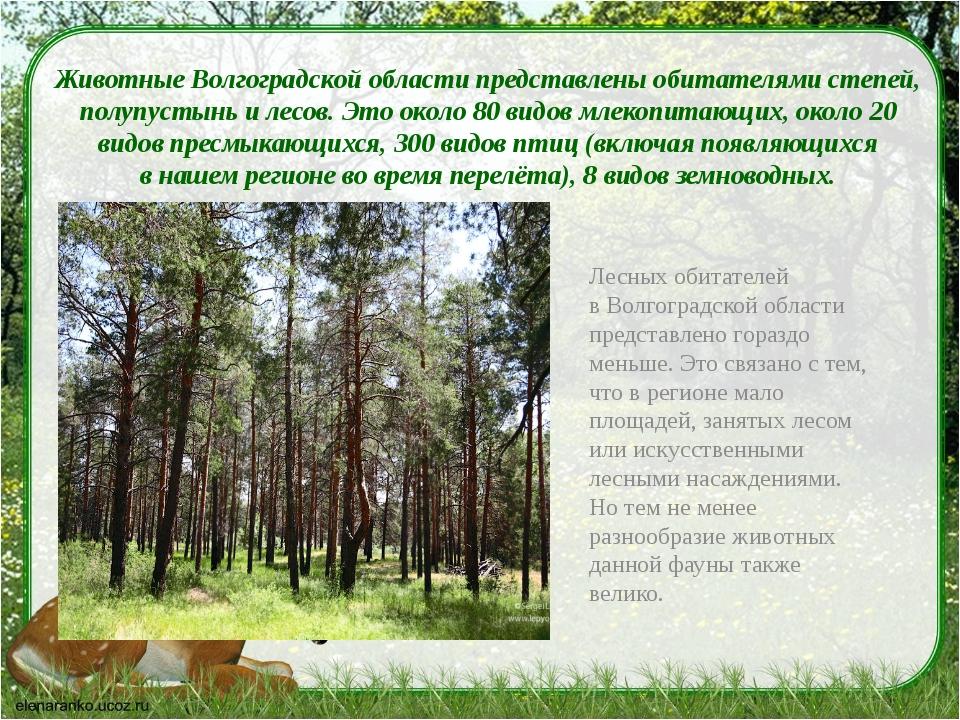 Животные Волгоградской области представлены обитателями степей, полупустынь...