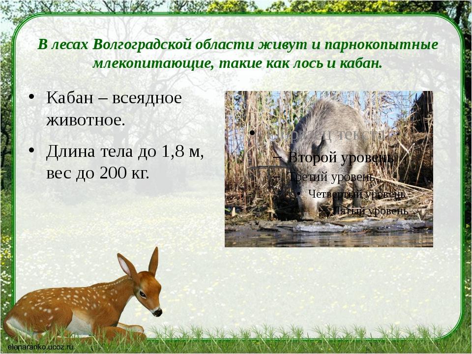 В лесах Волгоградской области живут ипарнокопытные млекопитающие, такие как...