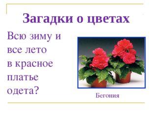 Загадки о цветах Всю зиму и все лето в красное платье одета? Бегония
