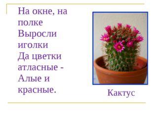 На окне, на полке Выросли иголки Да цветки атласные - Алые и красные. Кактус