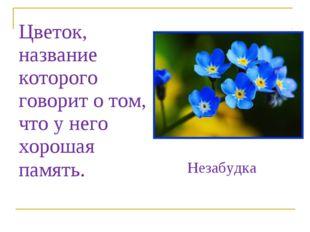 Цветок, название которого говорит о том, что у него хорошая память. Незабудка
