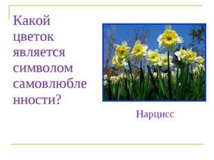 Какой цветок является символом самовлюбленности? Нарцисс