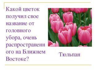 Какой цветок получил свое название от головного убора, очень распространенног