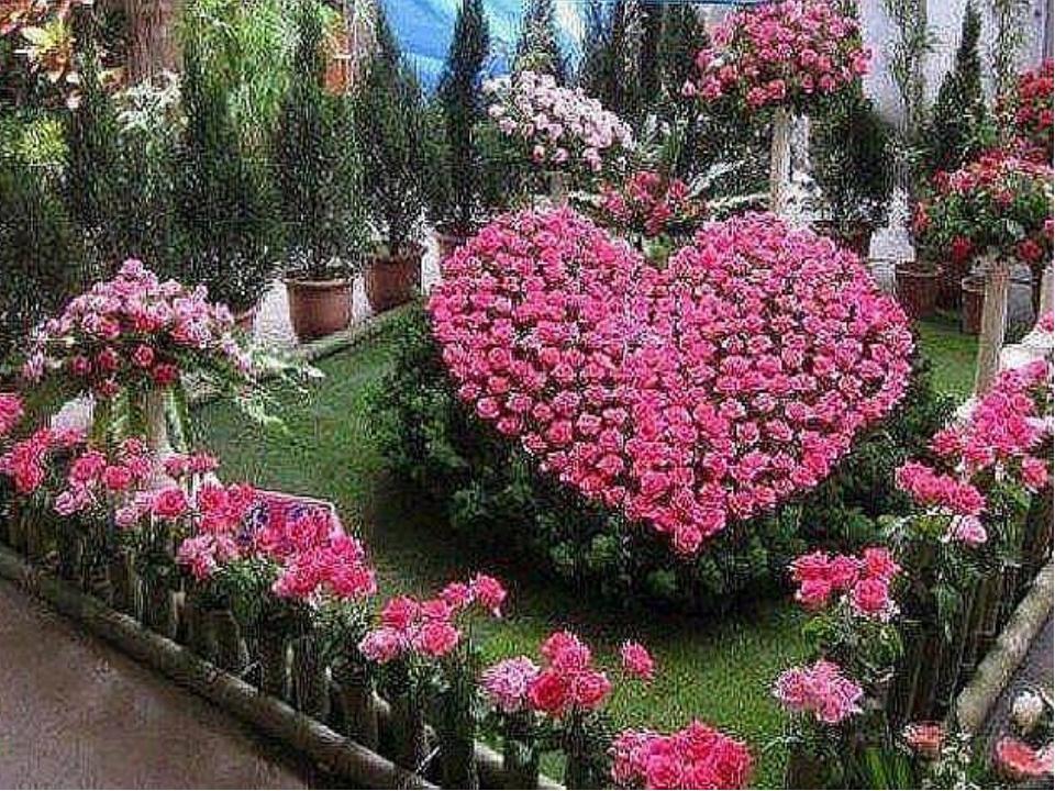 Цветочные клумбы своими руками с розами