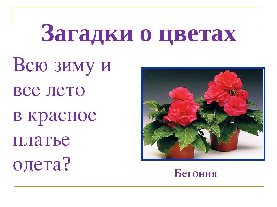 Дом самаре, про букет цветов загадки