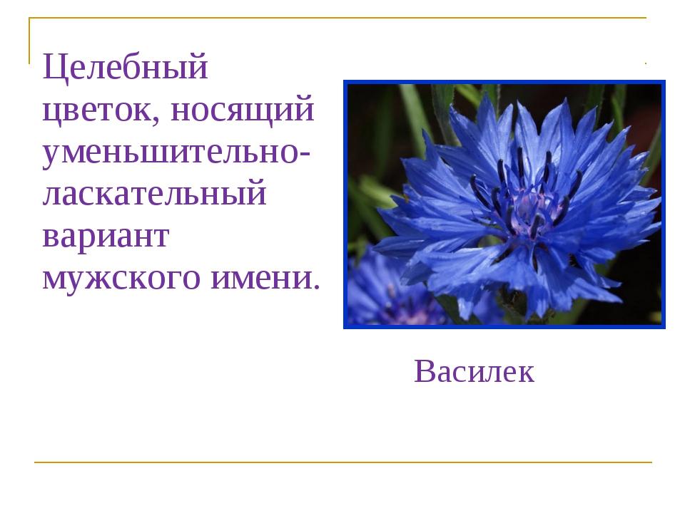 Целебный цветок, носящий уменьшительно-ласкательный вариант мужского имени. В...