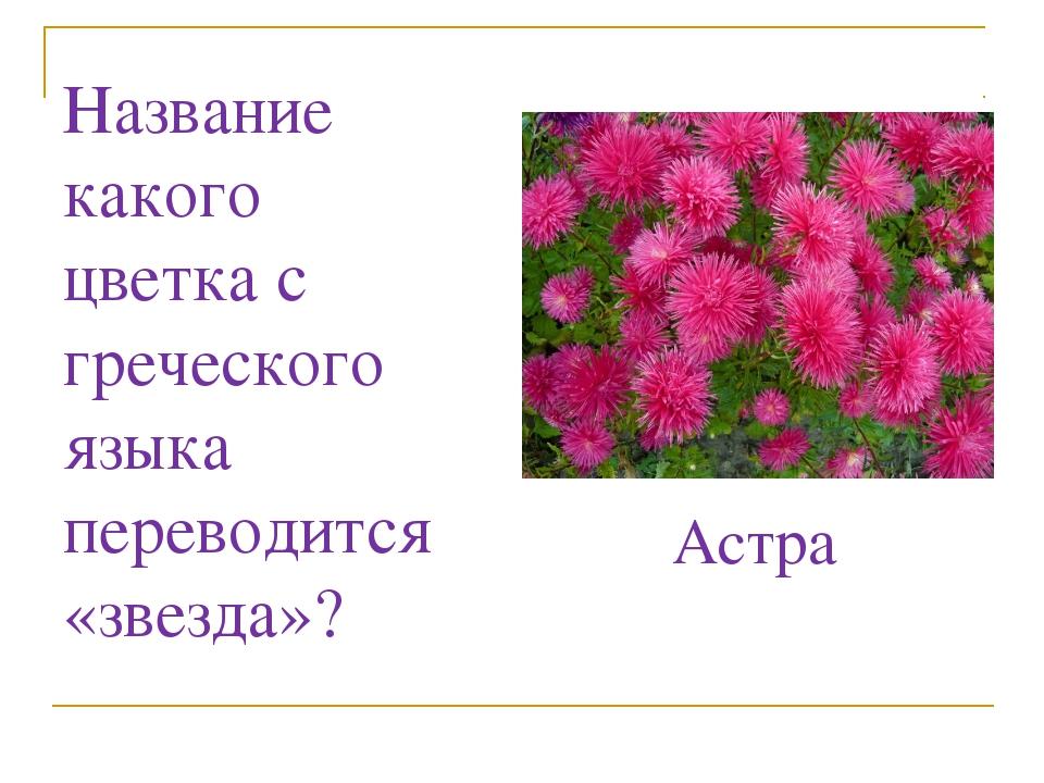 Название какого цветка с греческого языка переводится «звезда»? Астра