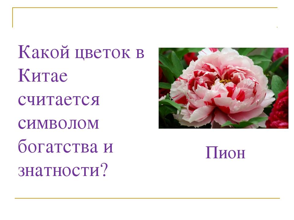Какой цветок в Китае считается символом богатства и знатности? Пион