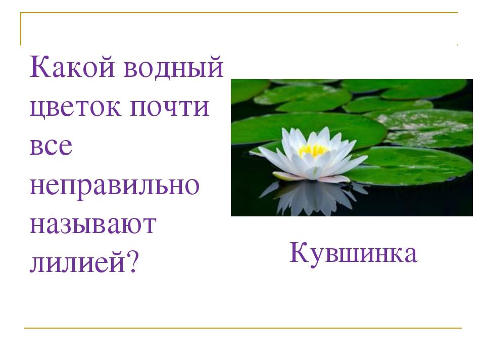 Какой водный цветок почти все неправильно называют лилией? Кувшинка