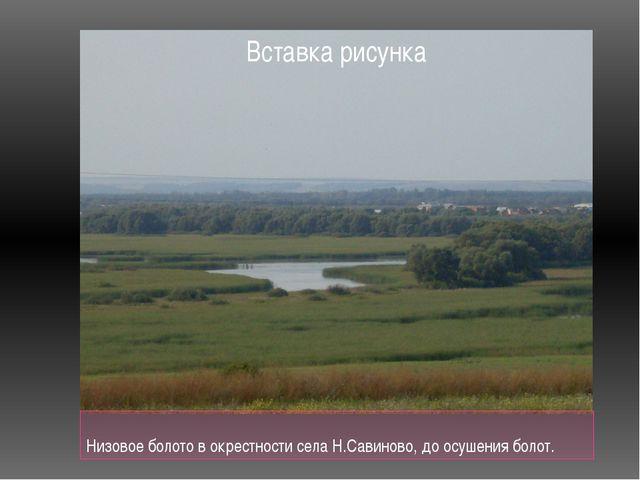 Низовое болото в окрестности села Н.Савиново, до осушения болот.