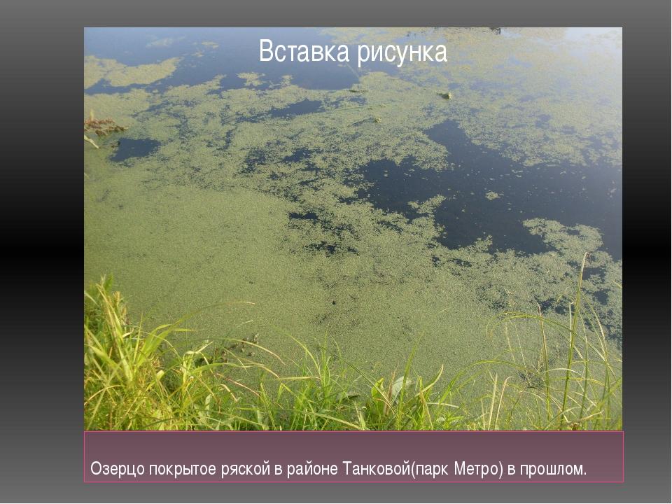 Озерцо покрытое ряской в районе Танковой(парк Метро) в прошлом.