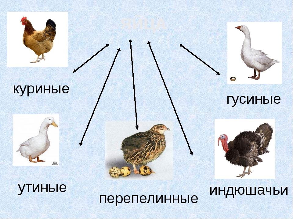 ЯЙЦА индюшачьи гусиные утиные куриные перепелинные