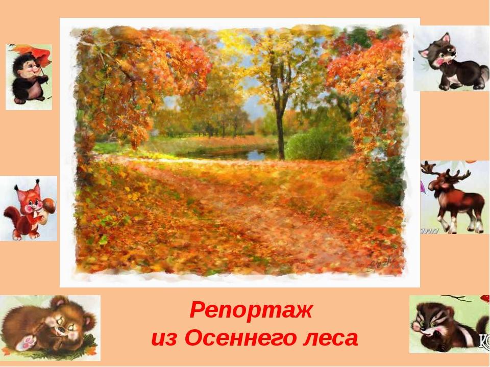 Репортаж из Осеннего леса