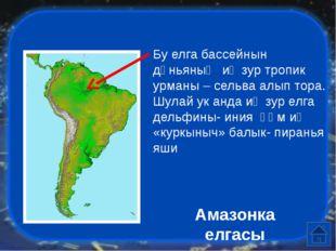 """Бу """"аю""""ның исеме ничек, ул кайсы материкта һәм нинди табигый зонада яши? Коа"""