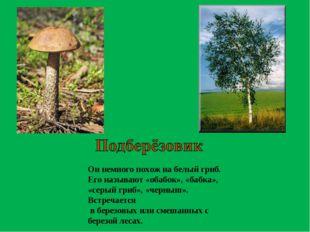 Он немного похож на белый гриб. Его называют «обабок», «бабка», «серый гриб»,