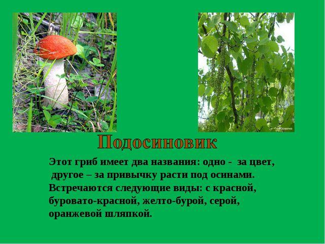 Этот гриб имеет два названия: одно - за цвет, другое – за привычку расти под...