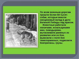 По всем военным дорогам прошли более 68 тысяч собак, которые внесли неоцени