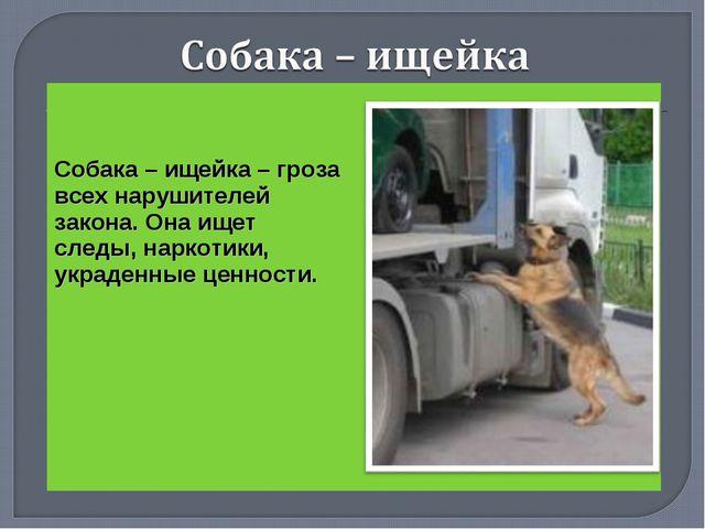 Собака – ищейка – гроза всех нарушителей закона. Она ищет следы, наркотики,...