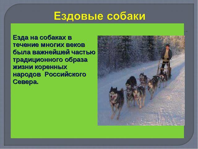 Езда на собаках в течение многих веков была важнейшей частью традиционного о...