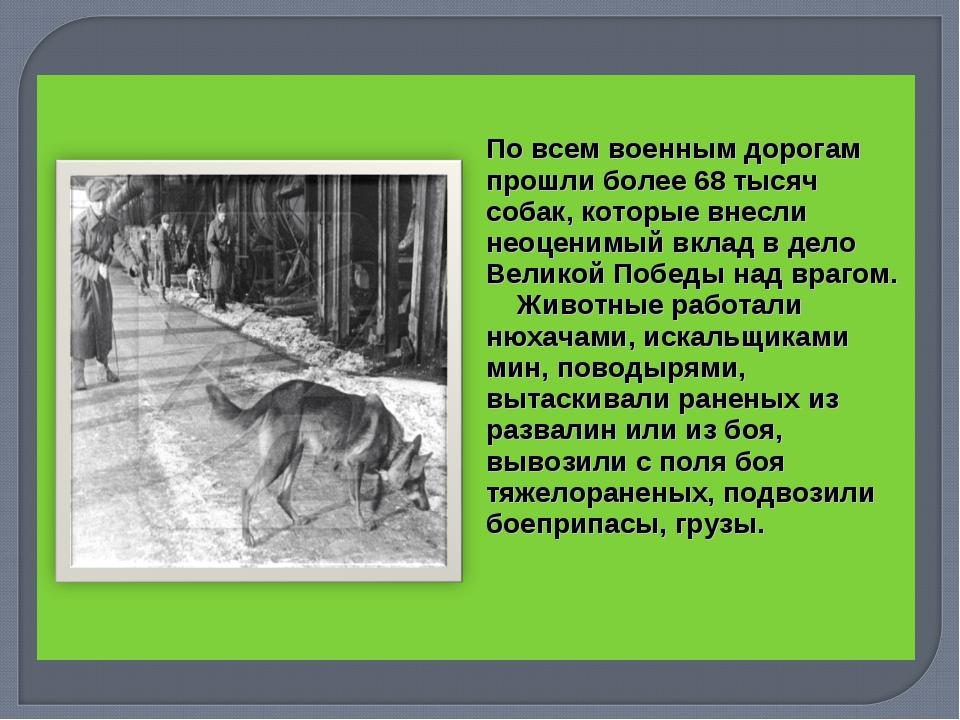 По всем военным дорогам прошли более 68 тысяч собак, которые внесли неоцени...