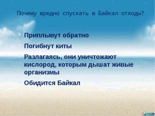 Почему вредно спускать в Байкал отходы? Приплывут обратно Погибнут киты Разла