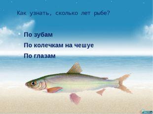 Как узнать, сколько лет рыбе? По зубам По колечкам на чешуе По глазам