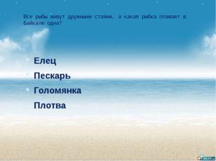 Все рыбы живут дружными стаями, а какая рыбка плавает в Байкале одна? Елец Пе