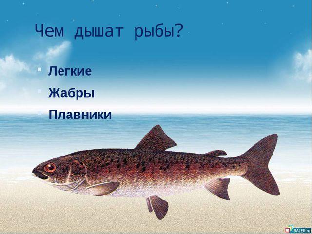Чем дышат рыбы? Легкие Жабры Плавники
