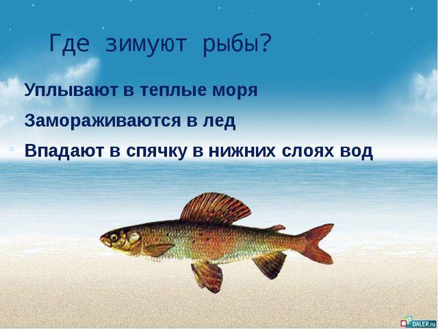 Где зимуют рыбы? Уплывают в теплые моря Замораживаются в лед Впадают в спячку...