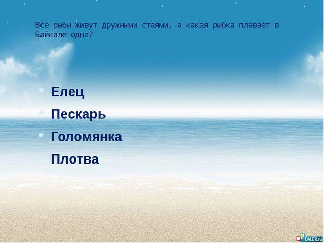 Все рыбы живут дружными стаями, а какая рыбка плавает в Байкале одна? Елец Пе...