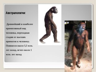 Австралопитек Древнейший и наиболее примитивный вид человека, переходная стад