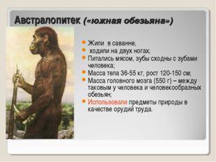 Австралопитек («южная обезьяна») Жили в саванне, ходили на двух ногах; Питали