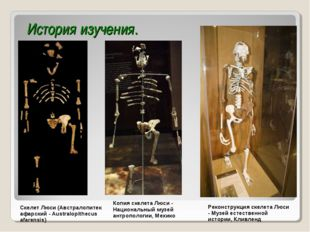 История изучения. Скелет Люси (Австралопитек афарский - Australopithecus afar