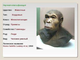 Научная классификация Царство:Животные Тип: Хордовые Класс:Млекопитающие О