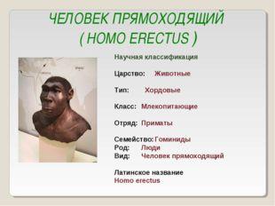 ЧЕЛОВЕК ПРЯМОХОДЯЩИЙ ( HOMO ERECTUS ) Научная классификация Царство:Животные